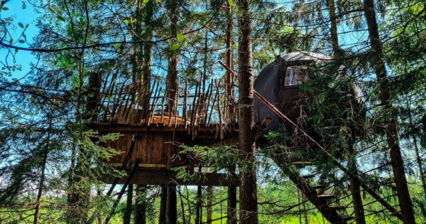 Palapinė medyje